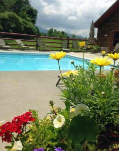 Beautiful summer flowers at the outdoor pool